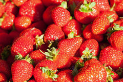 Fresh red strawberry on the market counter Stock Images