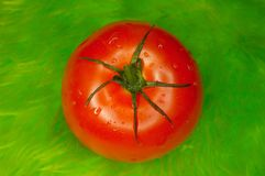 Fresh red tomato. On green Royalty Free Stock Photography