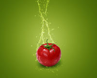 Fresh red tomato Stock Photography