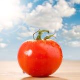 Fresh red tomato Stock Photos