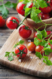 Fresh red tomato with green parsley Stock Photos