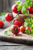 Fresh red tomato with green parsley Stock Image