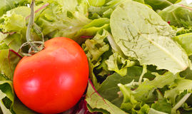 Fresh Red Tomato on Salad Greens Royalty Free Stock Photography