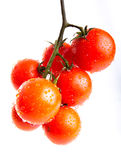 Fresh red tomatoes. Branch of cherry tomato isolated Royalty Free Stock Photography