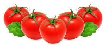 Fresh red tomatoes and basil Royalty Free Stock Photos