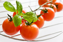 Fresh red tomatoes with basil leaf Stock Image