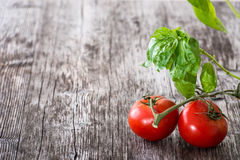 Fresh red tomatoes and basil Royalty Free Stock Image