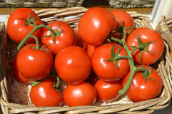 Fresh red tomatoes. In a basket Royalty Free Stock Photo