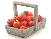 Fresh red tomatoes in a basket Stock Image
