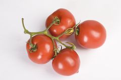 Fresh red tomatoes branch Stock Image