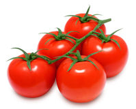 Fresh red tomatoes on a branch Royalty Free Stock Images