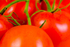 Fresh red tomatoes Royalty Free Stock Photography
