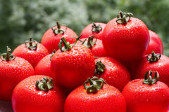 Fresh red tomatoes with drops. On a nature background Royalty Free Stock Photo
