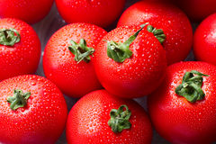 Fresh red tomatoes with drops royalty free stock images