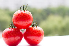 Fresh red tomatoes with drops on a nature background. For sample texte on it Stock Image