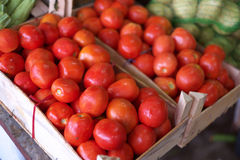 Fresh red tomatoes at Dubai Fish Market Royalty Free Stock Images