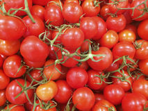 Fresh red tomatoes at farmers market Royalty Free Stock Images