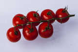 Fresh red tomatoes on green stem. Royalty Free Stock Images