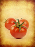 Fresh red tomatoes,Group of fresh red tomatoes royalty free stock images