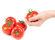 Tomatoes. Fresh red tomatoes in hand for Stock Photography