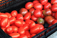 Fresh Red Tomatoes Royalty Free Stock Image
