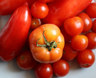 Fresh and red tomatoes Stock Images
