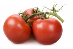 Fresh red tomatos Royalty Free Stock Photography