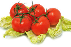 Fresh red tomatos with leaves cabbage Stock Photos