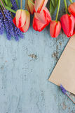 Fresh red tulip flowers on blue wooden table - Shabby chic. Top view with copy space Royalty Free Stock Photos