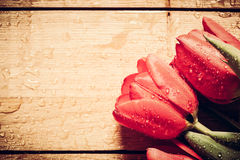 Fresh red tulip flowers bouquet on wood. Wet, morning dew. Stock Images