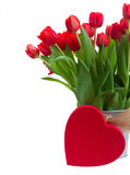 Fresh red tulip flowers Stock Images