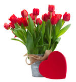 Fresh red tulip flowers Stock Photography