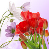 fresh red tulips on abstract spring nature background Stock Photos