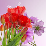 Fresh red tulips on abstract spring nature background Royalty Free Stock Photos