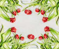 Fresh red tulips , flowers frame on white wooden background,frame Stock Photos