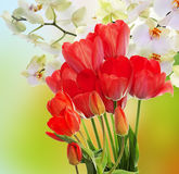 Fresh red tulips  and flowers orchid. Royalty Free Stock Photos