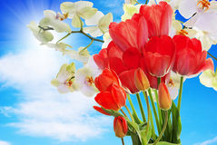 Fresh red tulips  and flowers orchid. Stock Photography