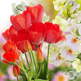 Fresh red tulips  and flowers orchid. Stock Photos