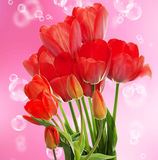 Fresh red tulips.Springtime Stock Photography