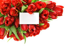 Fresh red tulips with white paper card Royalty Free Stock Photography