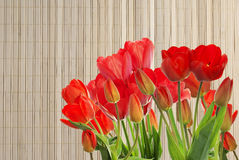 Fresh red tulips on wooden  background Royalty Free Stock Photography