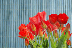 Fresh red tulips on wooden  background Stock Photo