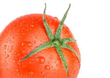 Fresh red wet tomato Stock Photography