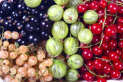 Fresh red, white, black currants and gooseberry Royalty Free Stock Photography