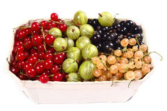 Fresh red, white, black currants and gooseberry Stock Photos