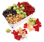 Fresh red, white, black currants and gooseberry Royalty Free Stock Images