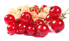 Fresh red and white currants Royalty Free Stock Images