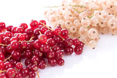 Fresh red and white currants. Isolated on white Stock Photos
