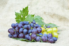 Fresh red and white grapes Stock Images
