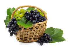 Fresh Red and White Grapes with Green Leaves in Wicker Basket Isolated on White Stock Photography